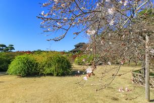 10月桜と好文亭の写真素材 [FYI03227544]