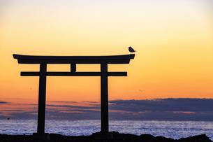 大洗磯前神社神磯の鳥居の写真素材 [FYI03227564]