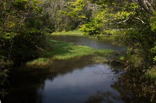 沖縄 やんばるの沼地の写真素材 [FYI03227896]