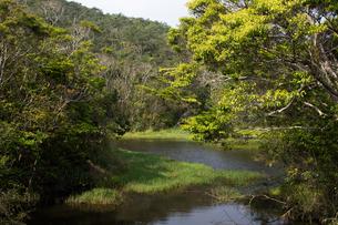 沖縄 やんばるの沼地の写真素材 [FYI03227899]