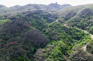 沖縄空撮 八重岳と桜の写真素材 [FYI03228014]
