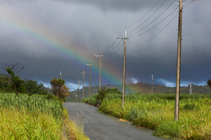 沖縄県の雨上がり 虹の写真素材 [FYI03228080]