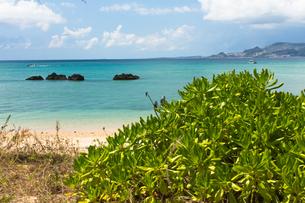 沖縄のビーチと植物の写真素材 [FYI03228093]