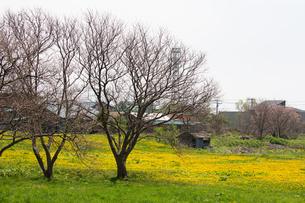 福島町の春の写真素材 [FYI03228269]