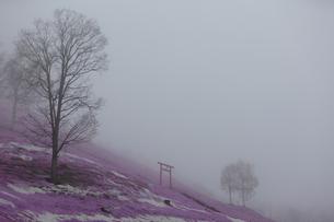 東藻琴の芝桜の写真素材 [FYI03228368]