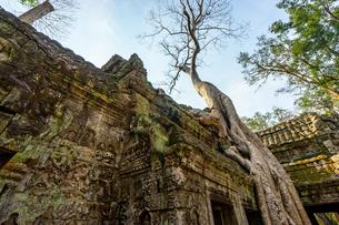 タ・プローム、カンボジアの写真素材 [FYI03228619]