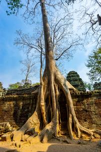 タ・プローム、カンボジアの写真素材 [FYI03228625]