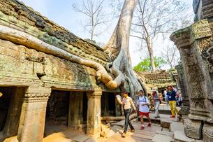 タ・プローム、カンボジアの写真素材 [FYI03228627]