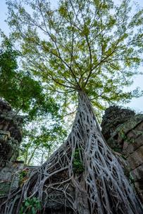 タ・プローム、カンボジアの写真素材 [FYI03228630]