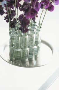 花器に入った花の写真素材 [FYI03228687]