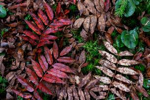 秋色の落ち葉の写真素材 [FYI03228750]