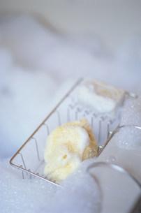 泡立った海綿の写真素材 [FYI03228760]