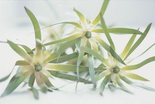 植物の写真素材 [FYI03228889]
