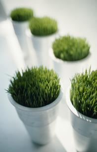 5つのシルバーの鉢に植えた植物の写真素材 [FYI03229005]