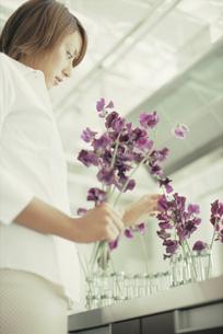 紫のスウィートピーを生ける女性の写真素材 [FYI03229006]