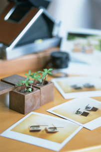 写真と植物の芽の鉢がある机の写真素材 [FYI03229113]