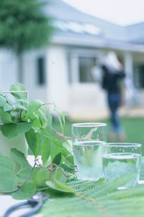 水の入ったグラスや植物越しの家の写真素材 [FYI03229126]