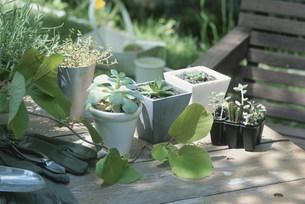 テーブルの上の鉢植えや園芸用品の写真素材 [FYI03229165]