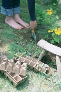 庭に苗を植える素足の女性の写真素材 [FYI03229195]