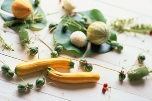 野菜と葉の写真素材 [FYI03229823]