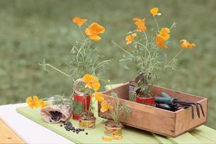 花とガーデニング小物の写真素材 [FYI03229879]