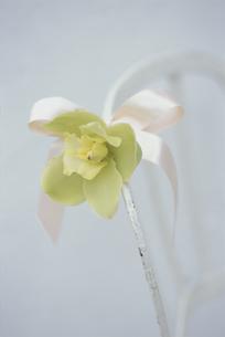 椅子の背にリボンでつけた花の写真素材 [FYI03229974]