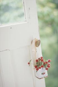 ドアノブに吊るした缶入りの植物の写真素材 [FYI03229990]