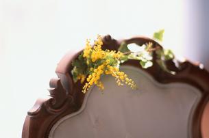 椅子の背のミモザの写真素材 [FYI03229998]