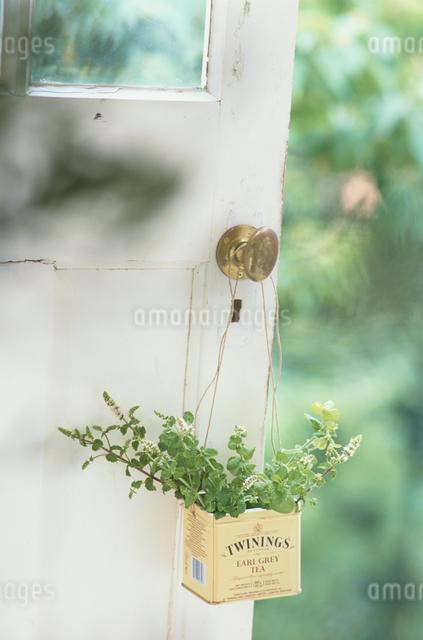 ドアノブに吊るした缶の中のハーブの写真素材 [FYI03230075]