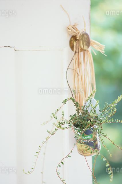 吊り下げられた缶の中のコケモモの写真素材 [FYI03230079]