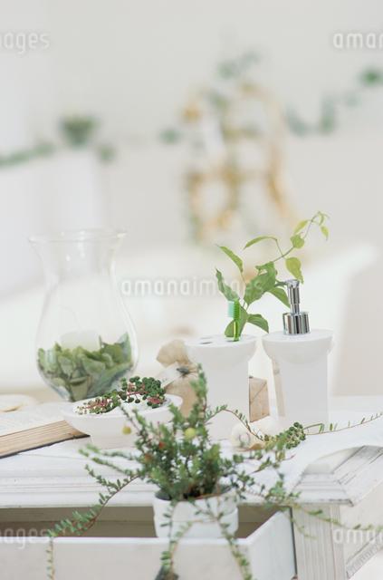 洗面台の上の観葉植物とバスグッズの写真素材 [FYI03230093]