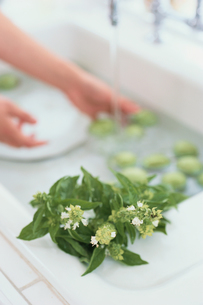 キッチンシンクの花の咲いたバジルの葉の写真素材 [FYI03230108]