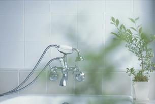 バスルームの蛇口と観葉植物の写真素材 [FYI03230147]