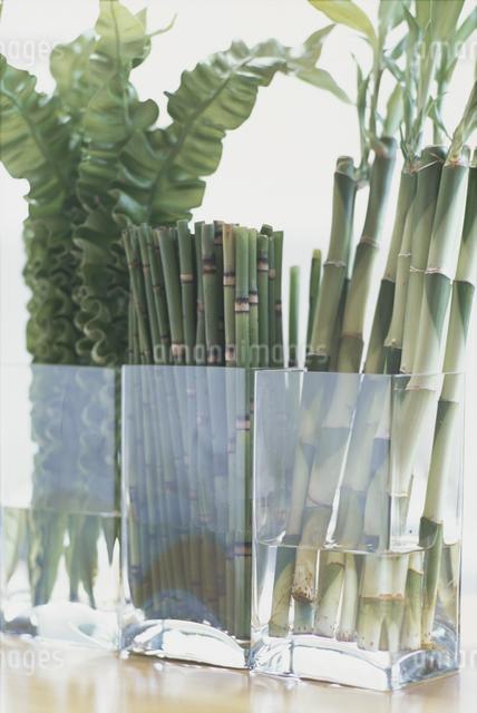 ガラスの器に活けられた植物の写真素材 [FYI03230154]