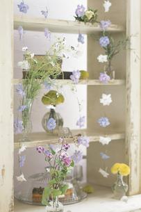 棚に並んだ花の写真素材 [FYI03230157]