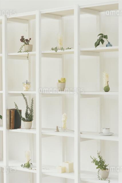 白い棚に並んだ観葉植物の写真素材 [FYI03230158]
