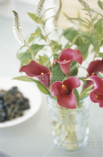 花瓶と紫のカラーの写真素材 [FYI03230211]