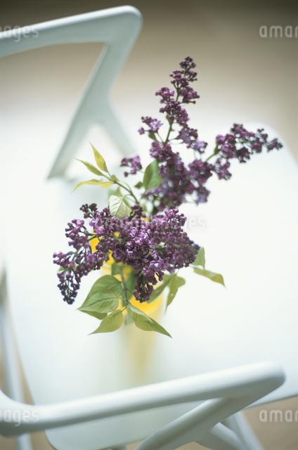 花瓶に入った花の写真素材 [FYI03230212]