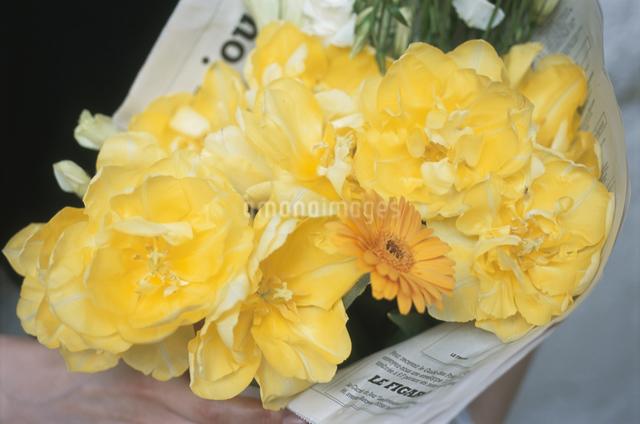 黄色い花の写真素材 [FYI03230213]