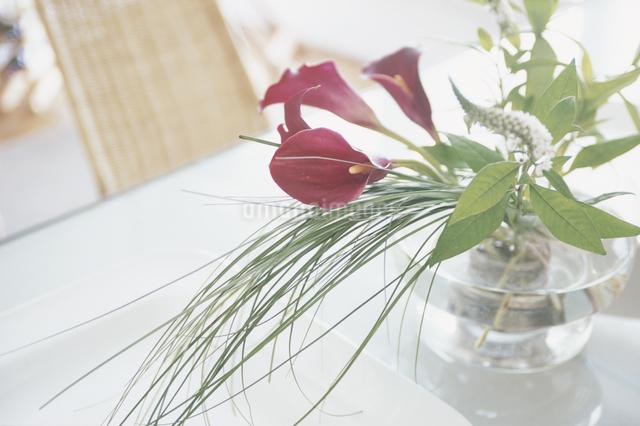 花瓶と紫のカラーの写真素材 [FYI03230216]