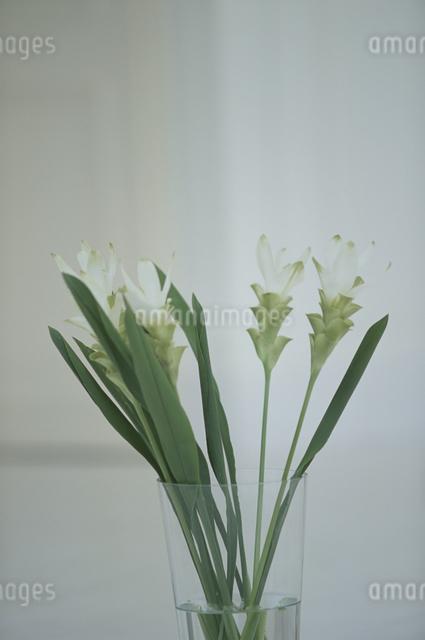 花瓶に入った花の写真素材 [FYI03230218]