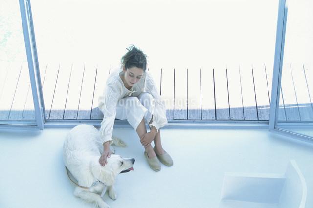プールサイドで犬と遊ぶ女性の写真素材 [FYI03230500]
