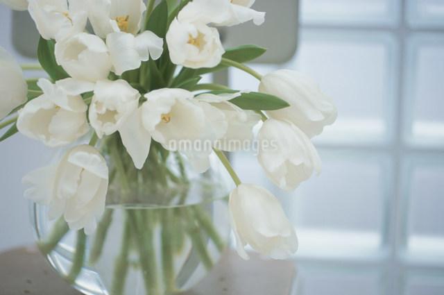 花瓶に活けた白いチューリップの写真素材 [FYI03230532]