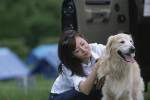 犬(ゴールデンレトリバー)をなでる日本人女性の写真素材 [FYI03230533]