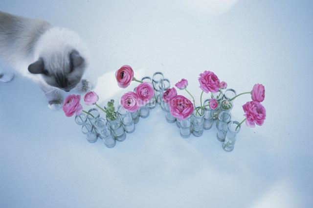 猫とピンクの花の写真素材 [FYI03230593]