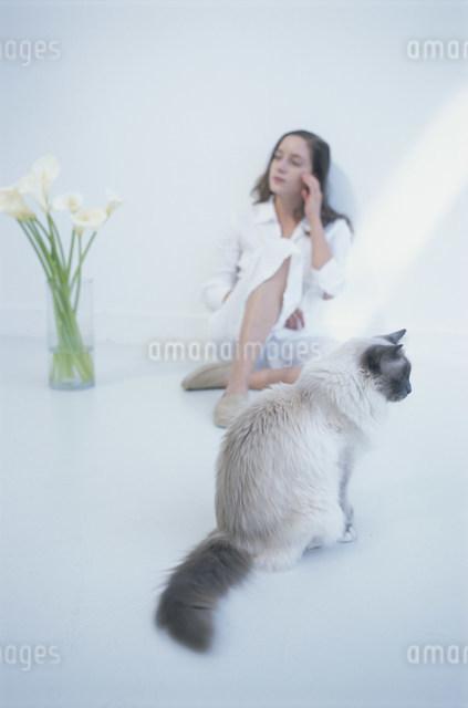 猫(ラグドール)と花(カラー)のそばに座る女性の写真素材 [FYI03230605]