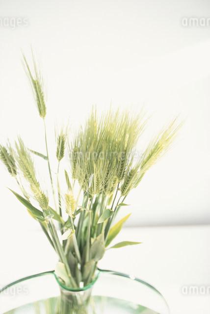 ガラスの花瓶に活けた麦穂の写真素材 [FYI03230684]