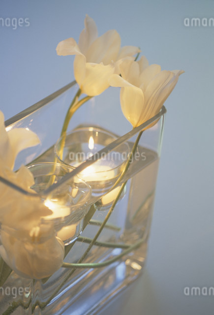 キャンドルを浮かべた器に活けた白いチューリップの写真素材 [FYI03230754]