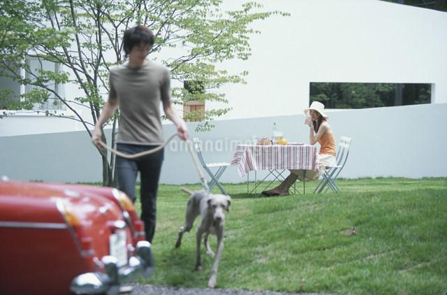 犬(ワイマラナー)を連れた男性とテーブルに座る女性の写真素材 [FYI03230862]