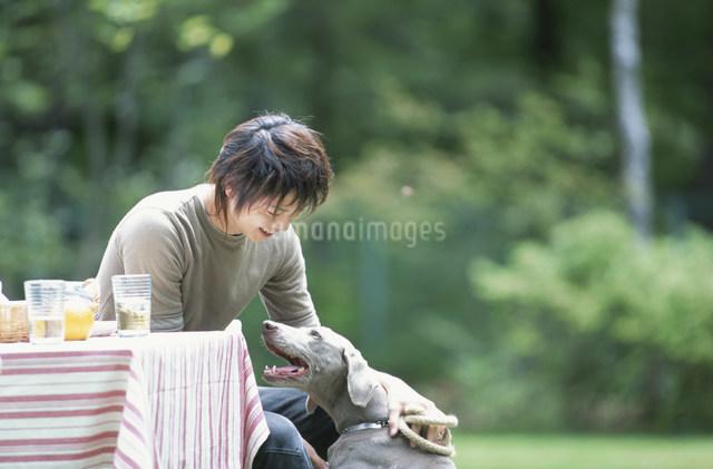犬(ワイマラナー)と遊ぶ日本人男性の写真素材 [FYI03230865]